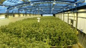 Maryland Medical Marijuana Grow
