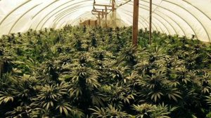Maryland is next on the east coast to have its cannabis program be in full effect.