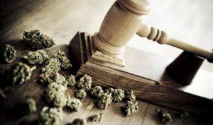 Maryland Marijuana Industry continues on